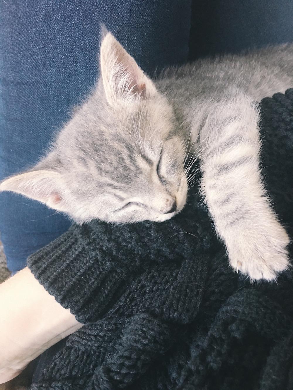 Grey tabby kitten asleep