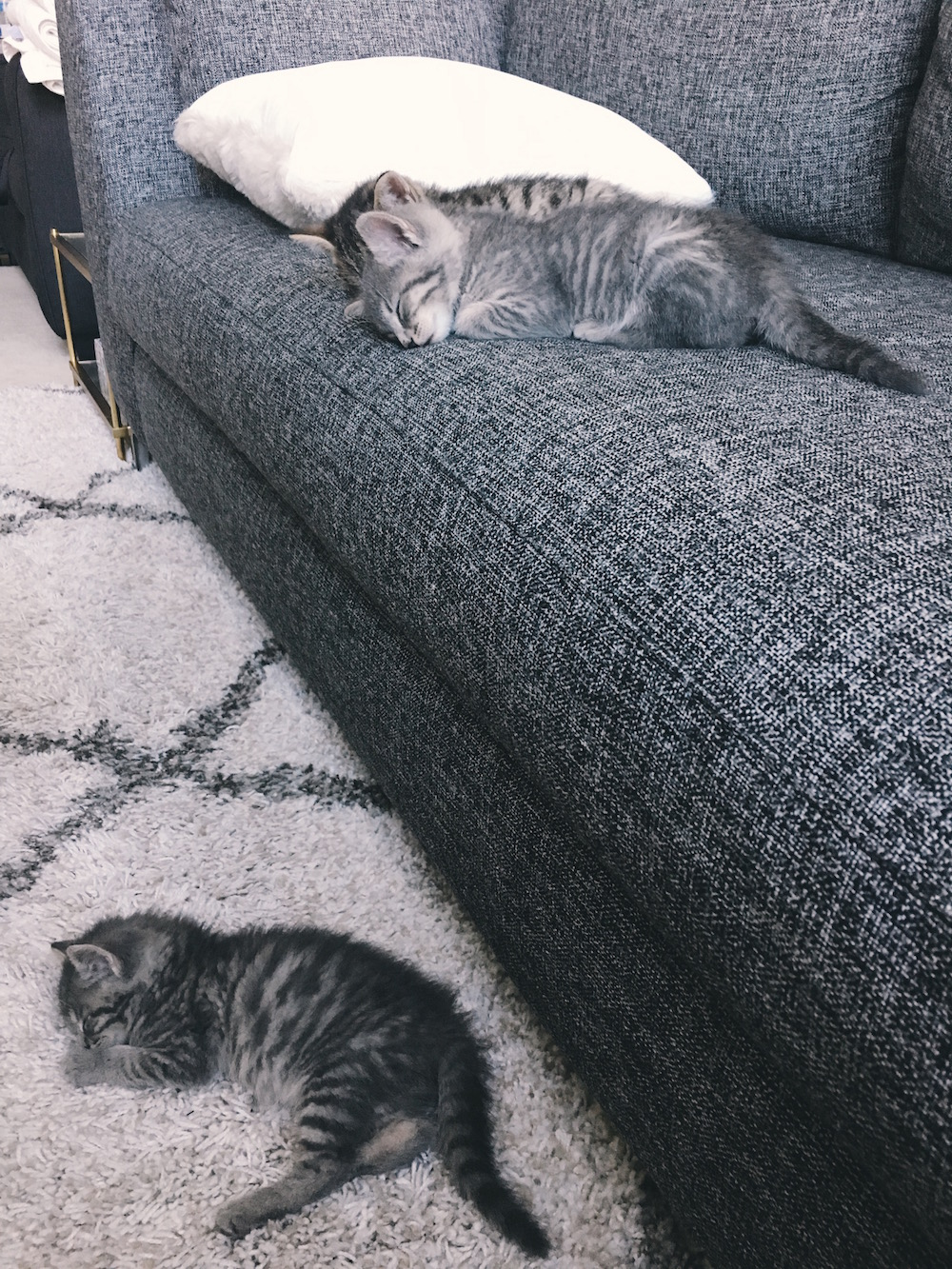Kitten on rug and kittens on couch