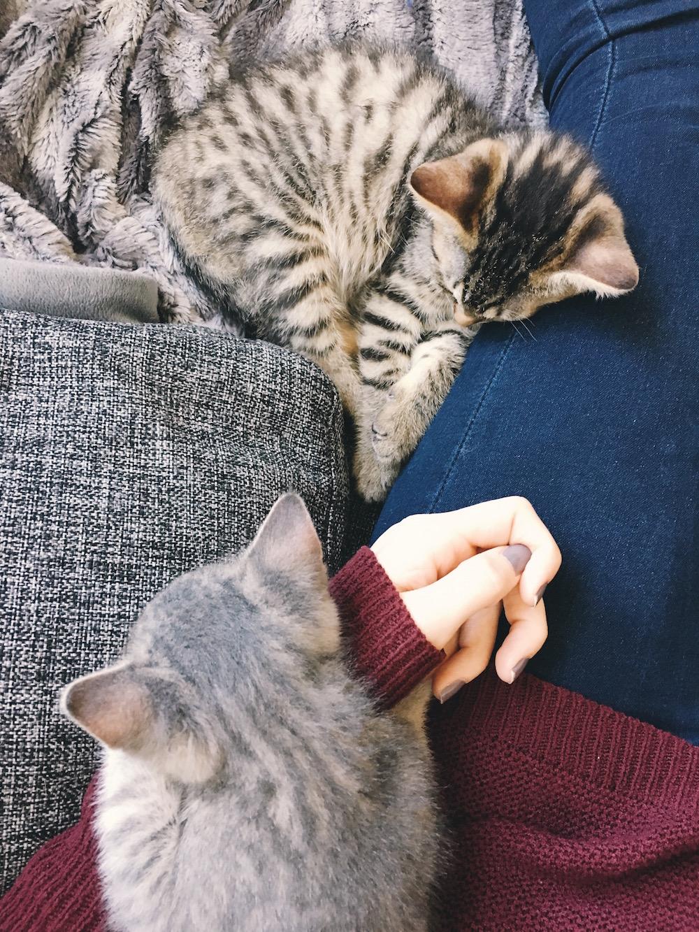 Grey and tabby kitten asleep