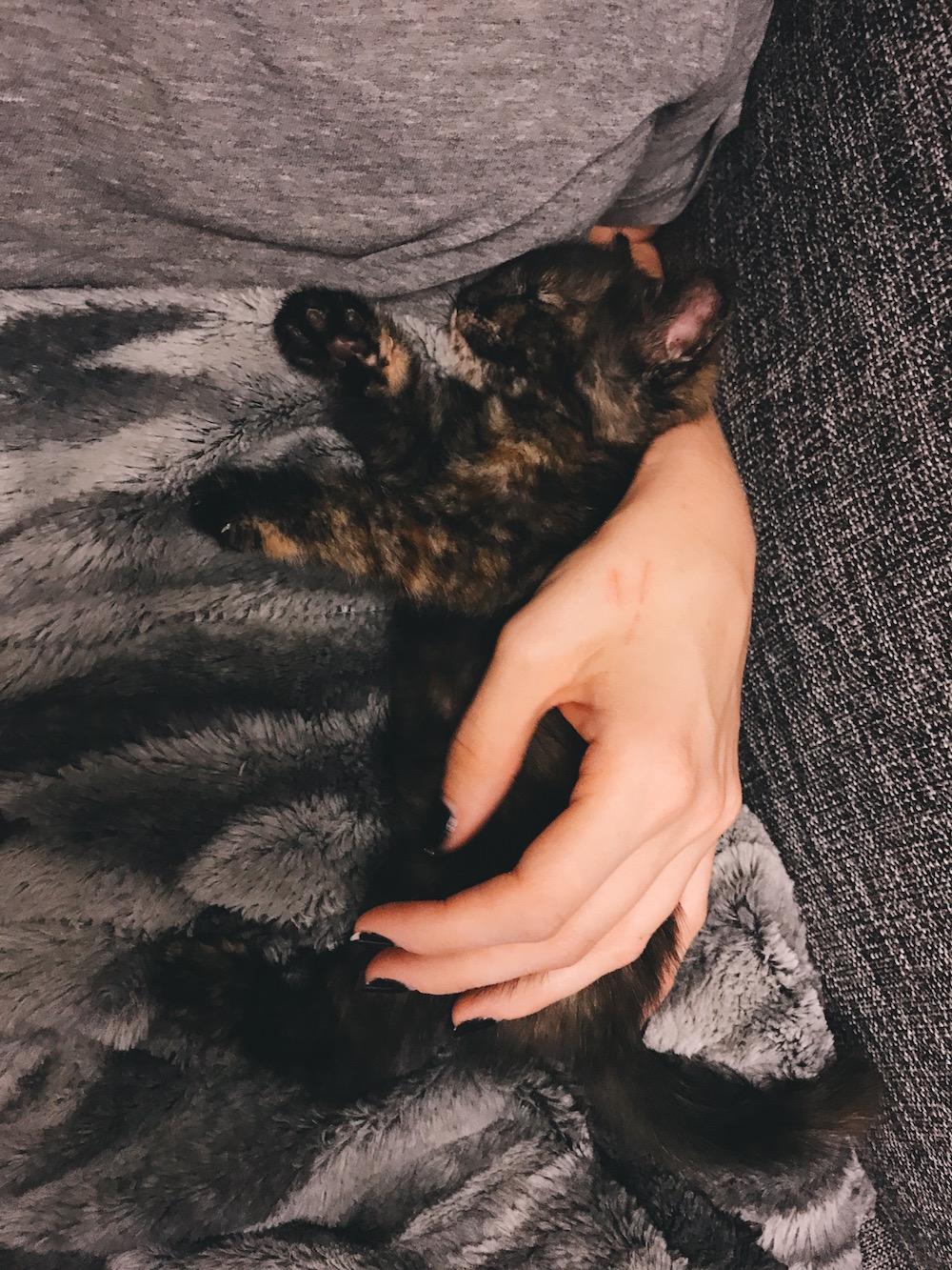 Dark tortoise calico cat sleeping