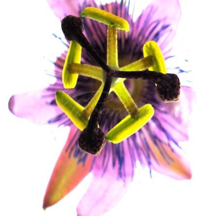 square_flower_s13.jpg