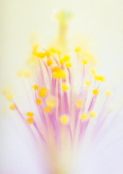 white_flower_P04.jpg
