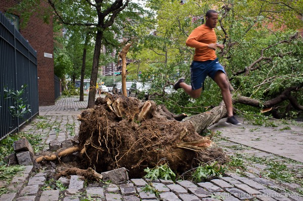 A jogger hurdles a fallen tree in New York on the morning after Hurricane Irene