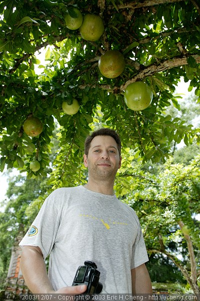 Dave, underneath pomelos