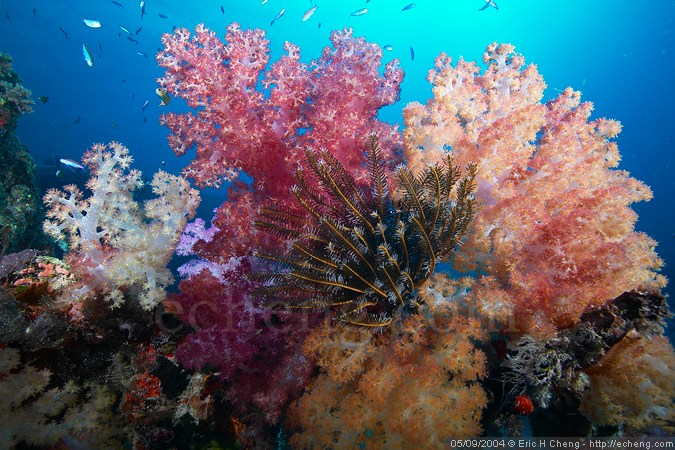 There are some nice colors out at Rainbow Reef