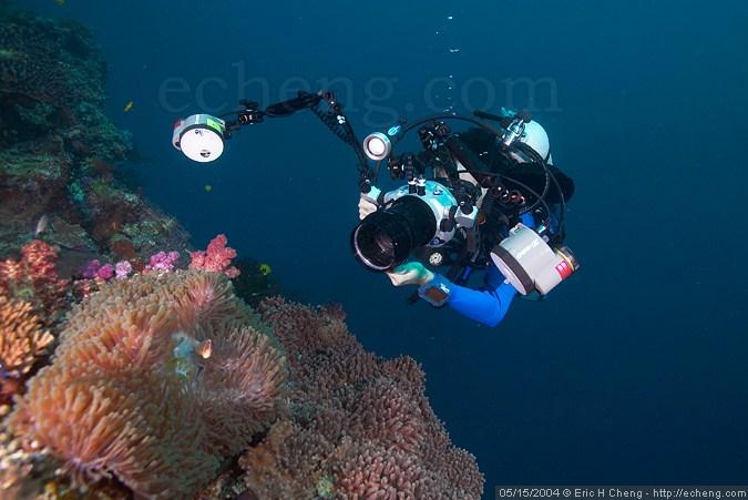 Sea anemone and James Wiseman at Black Magic, Vatu-i-ra