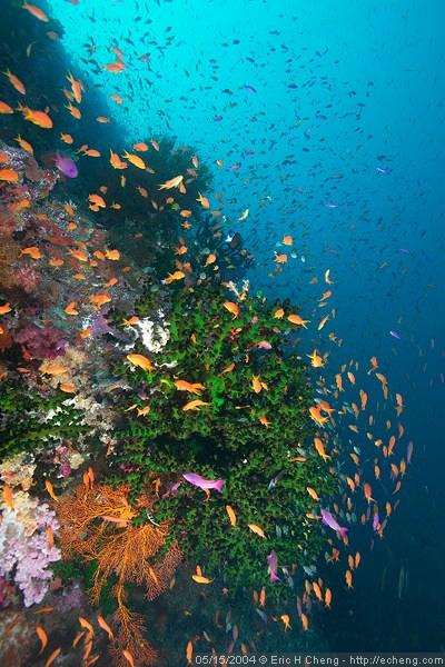 Colorful coral at Black Magic, Vatu-i-ra