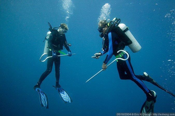 James and David, shark shepherds