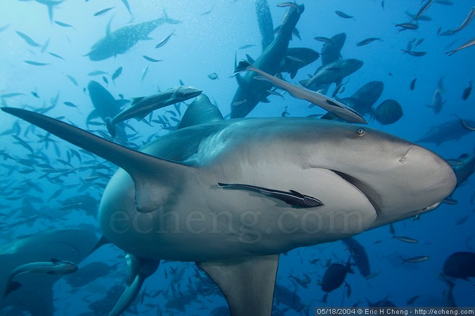 My one close encounter with a bull shark (during this trip)