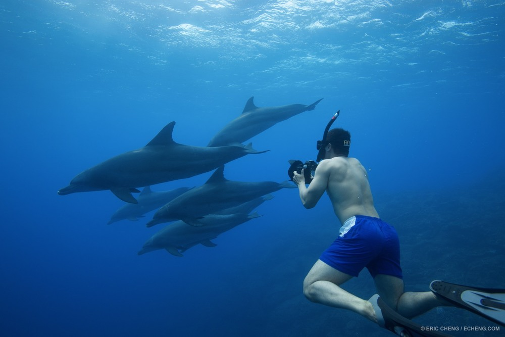 Tony Wu with Indo-Pacific bottlenose dolphins (Tursiops aduncus) off of Chichijima in the Ogasawara Islands, Japan