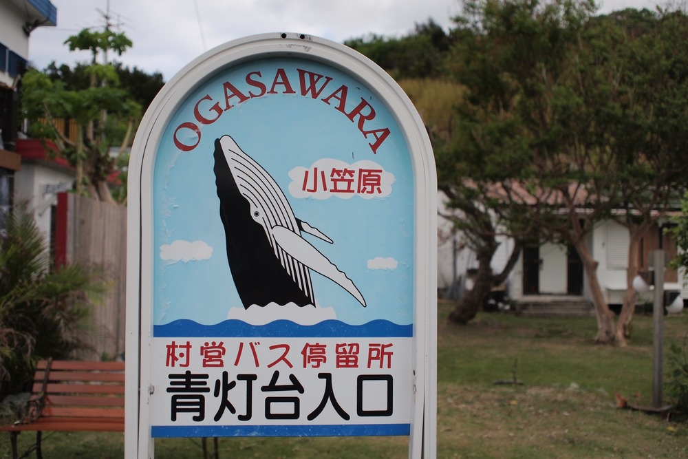 Everything in Ogasawara is cetacean-themed.