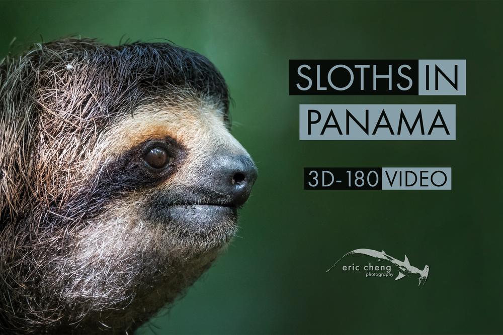 sloth credits opener.png