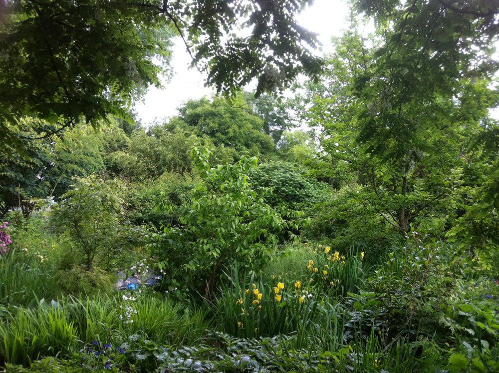 Cottonwood Garden wetlands, image courtesy of Oliver Kellhammer.