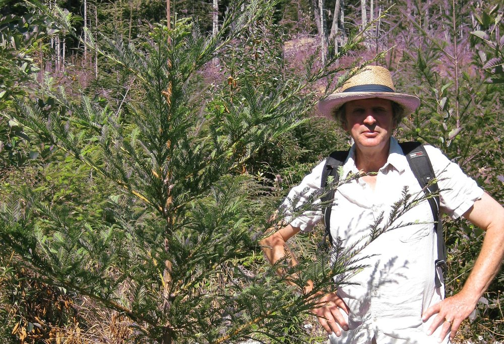 Rupert Sheldrake with a young coast Redwood, image courtesy of Oliver Kellhammer.