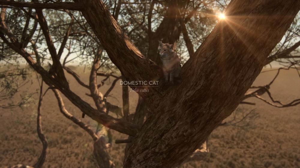 cats_010_016_text_v005_0236.jpg
