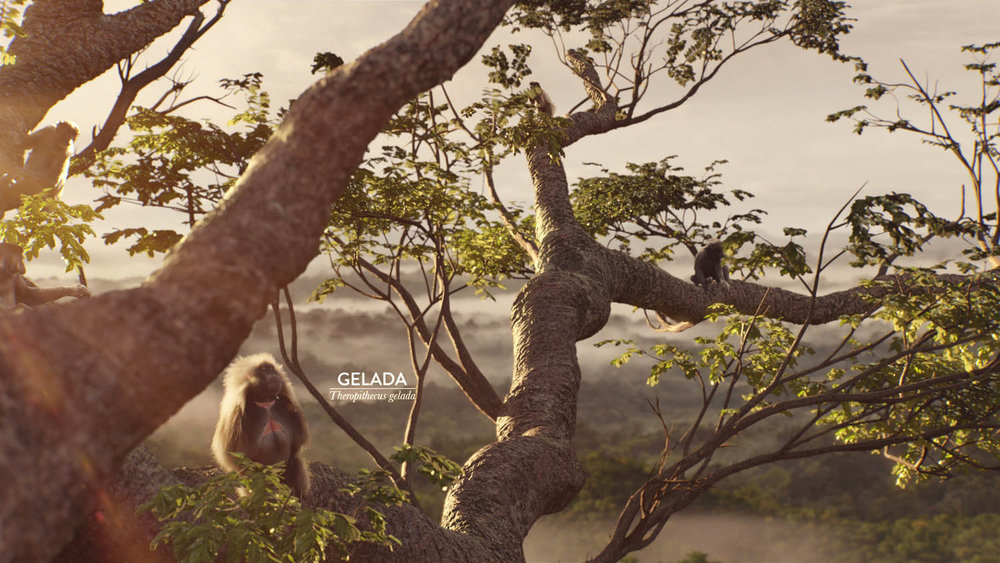 Monkeys visual effects Sky Television UK