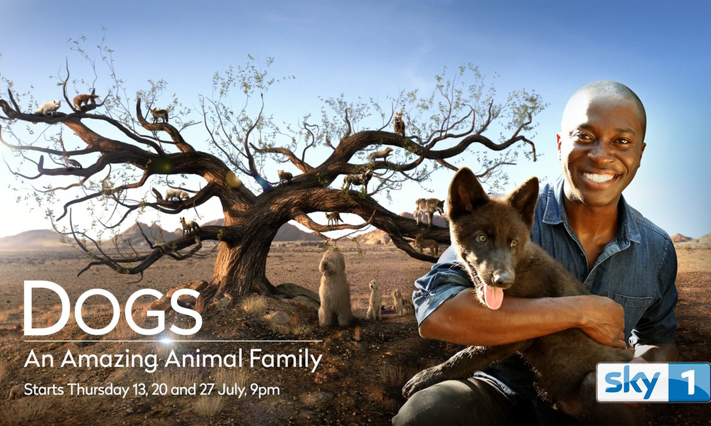 Team Moonraker are looking forward to watching Dogs: An Amazing Animal Family produced by our good friends at Offspring Films. Following on from our Best Visual Effects RTS win for Cats: An Amazing Animal Family, the photoreal family tree has been taken to the next level for this new series on the Dog family tree!