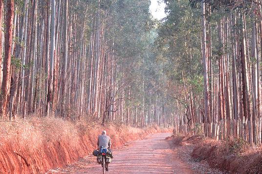 Ecalyptus Plantation Brazel