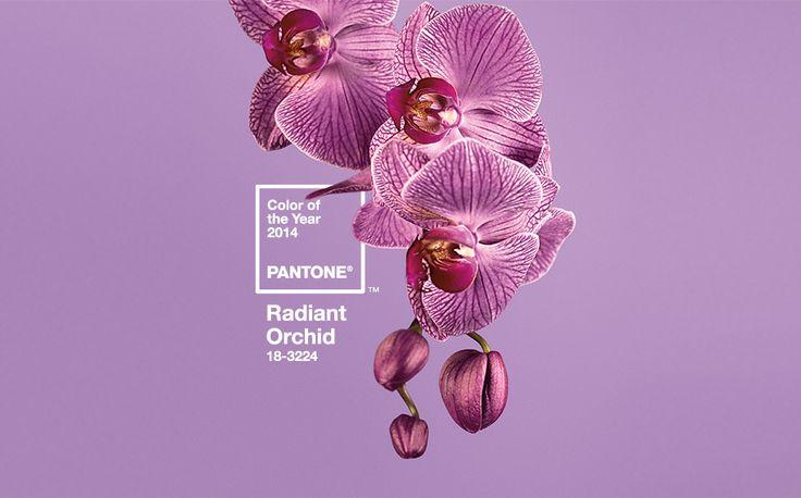 radiantorchid