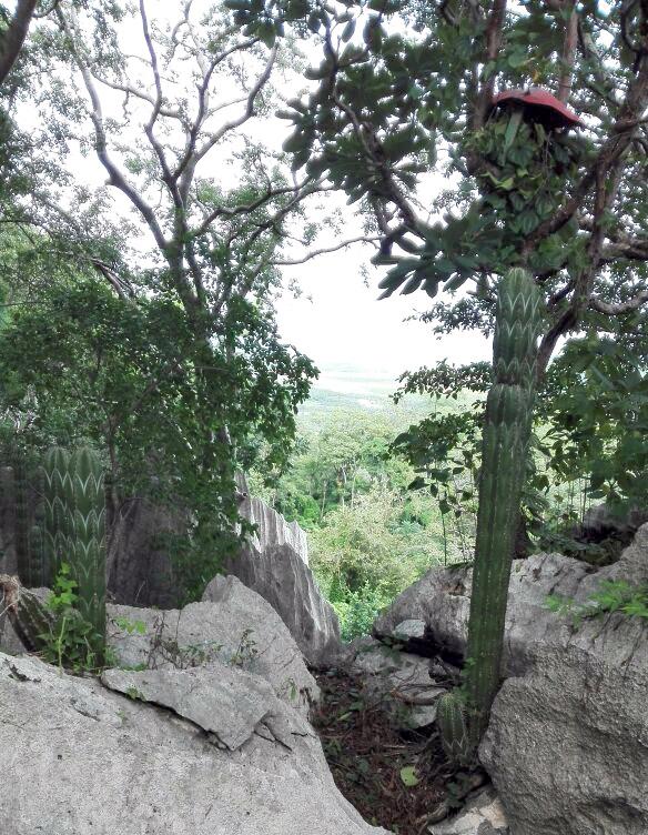 Canopy en la comunidad de Sonzapote sería uno de los servicios turísticos que se darían con la Cooperativa. (Imagen de la Red del Golfo)