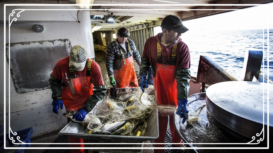 Purvis Fisheries (Photo:  The Manitoulin Expositor )