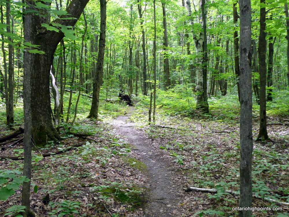 Blue trail (Photo:  Ontario High Points )