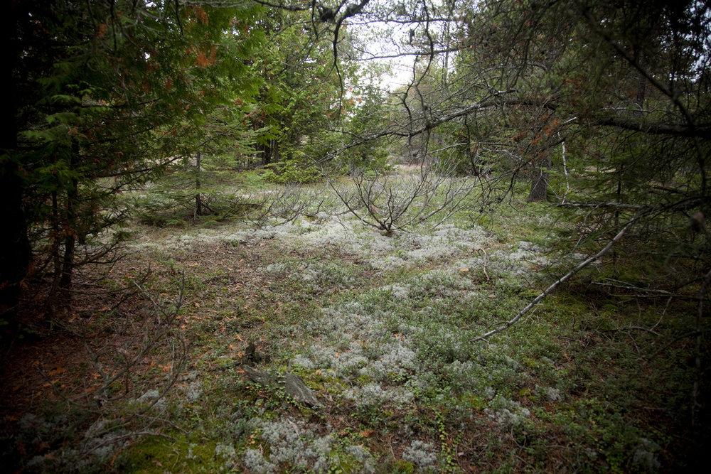 Burnt Island alvar woodland (Photo:  Flickr )