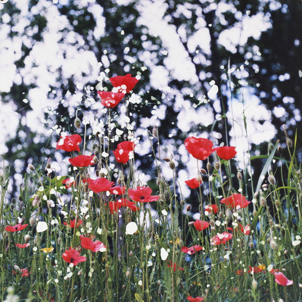Photo Credit: Dianne Bos, 'Plugstreet Poppies, Ploegsteert, Belgium'