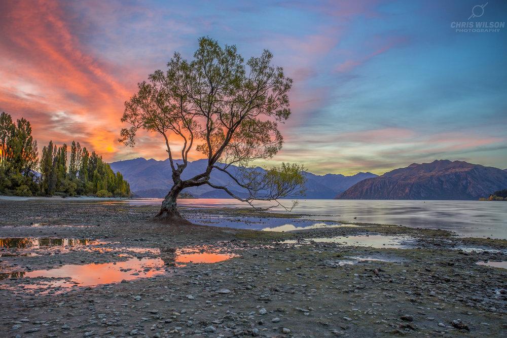image_02__wanaka_tree_sunset.jpg