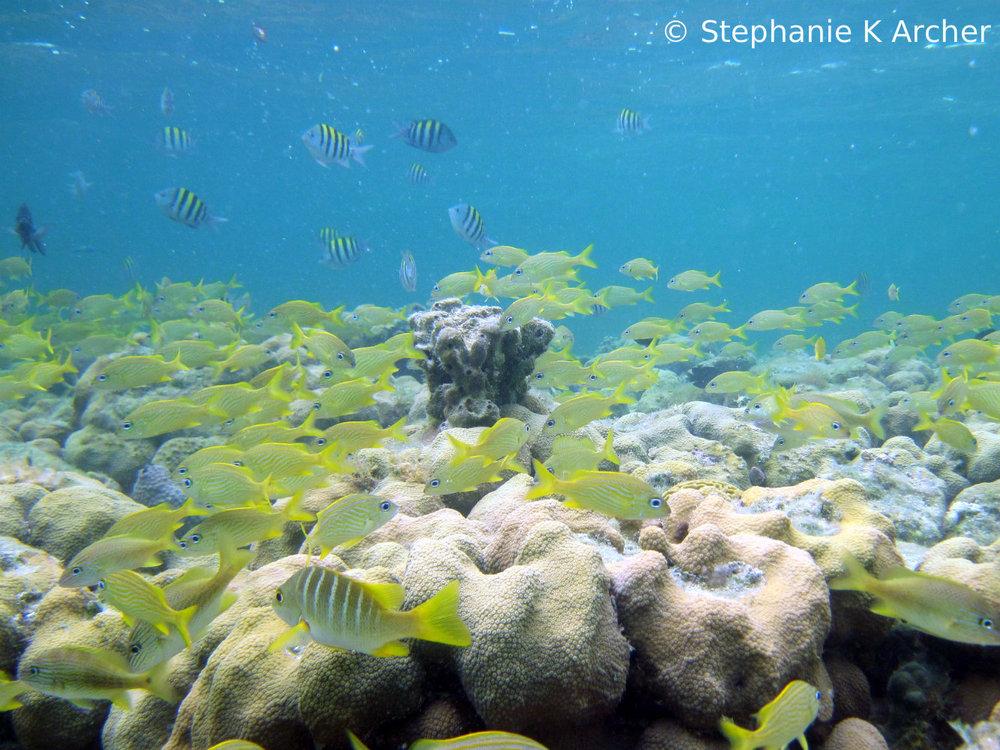 Ircinia_Grunts_Reef.jpg