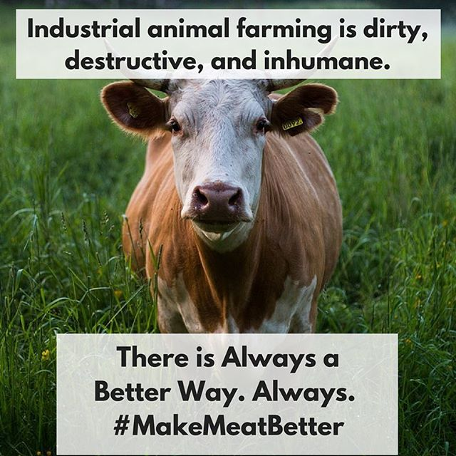 Just because we've always made meat from animals doesn't mean it's the only way. There is always a way to improve something. It's time we innovate meat with plants and clean tech. #NewOmnivore #MeatInnovation #sustainable #food #climatechange #MakeMeatBetter