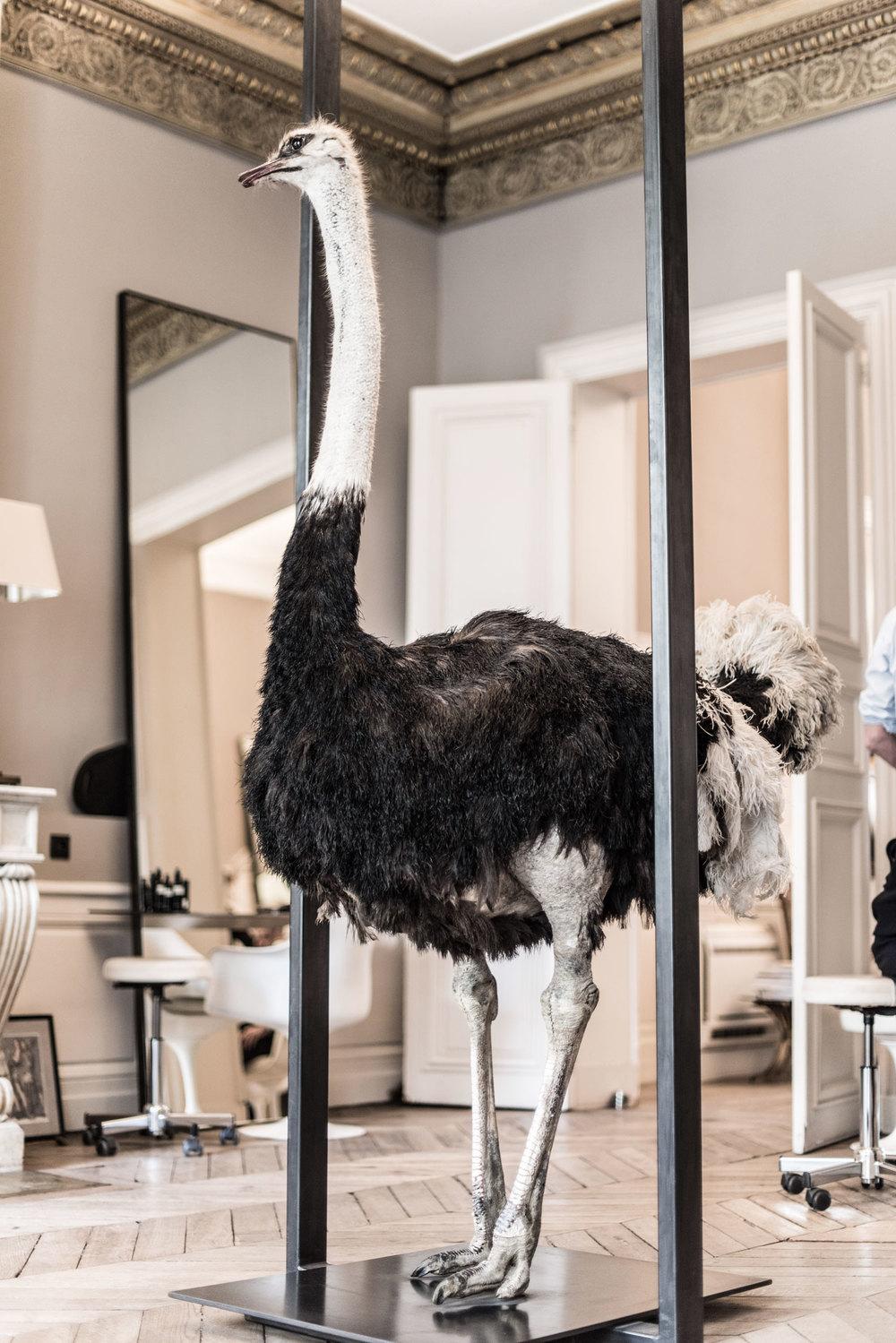 Ostrich at David Mallett salon