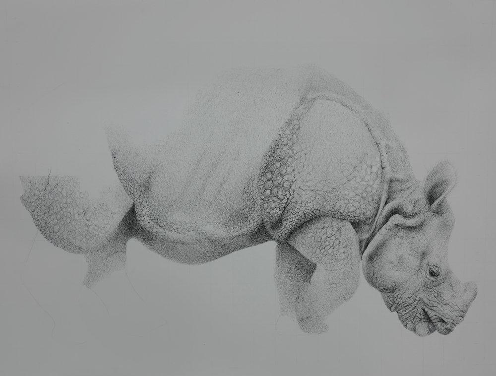 Rhino, pen on heavy weight paper, 20x24