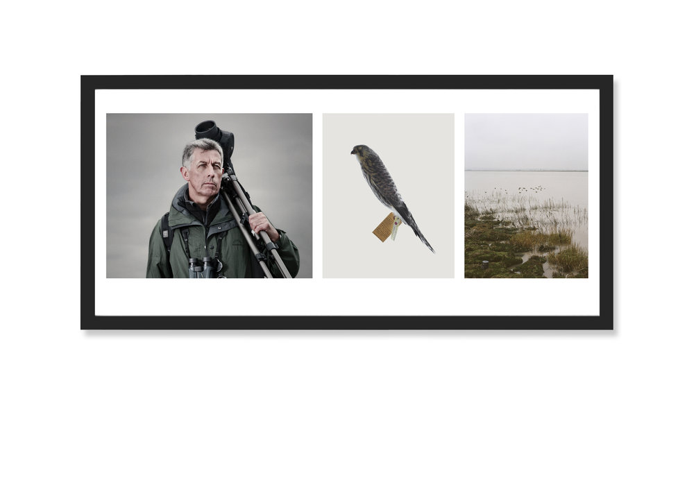Triptych Image: Tinnunculus Twitters, 2009-13 Framed Archival Inkjet 36 x 20 inches