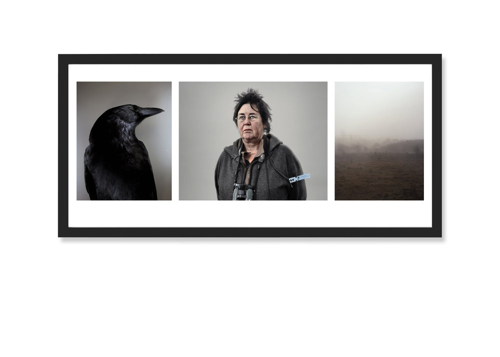 Triptych Image: Corvus Twitters, 2009-13 Framed Archival Inkjet  36 x 20 inches