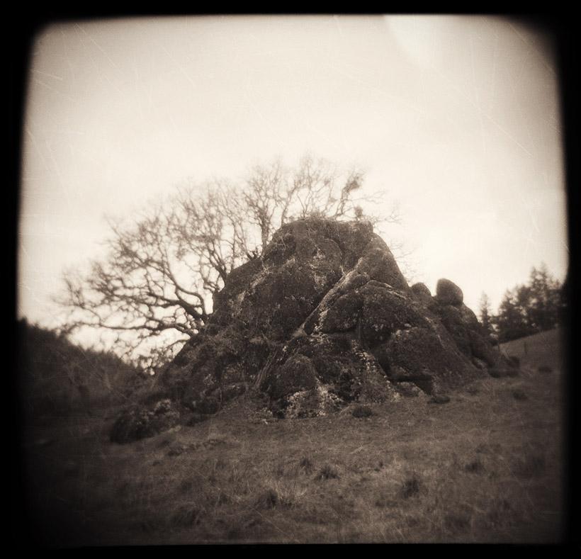 oaktree_sepia2
