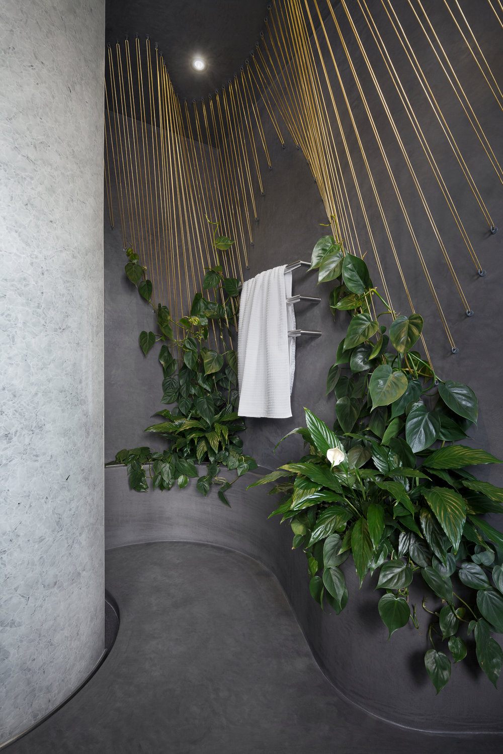 Air-filtering plants improve indoor climate.