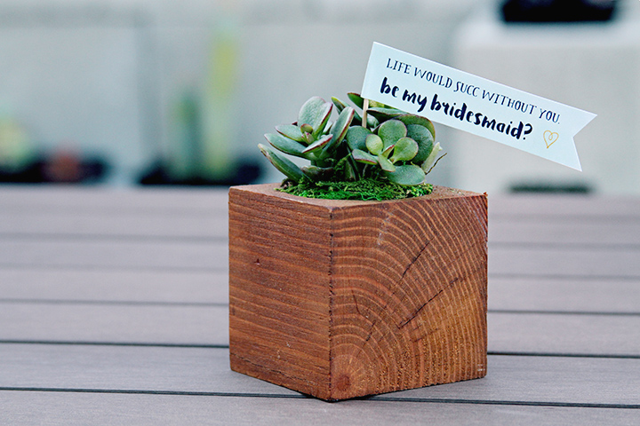 will you be my bridesmaid succulent