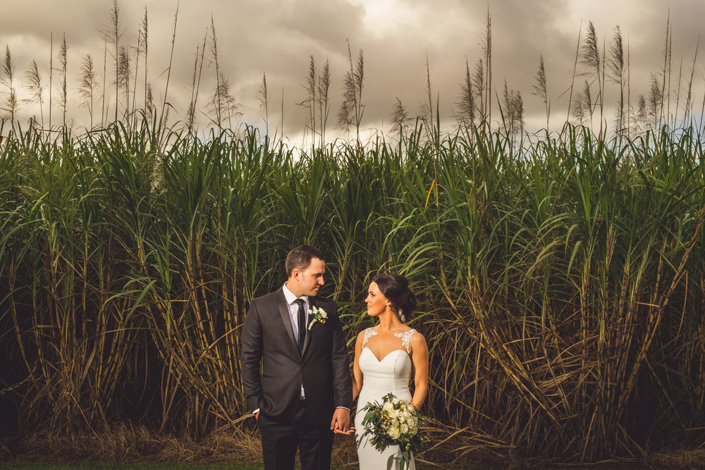 wedding couple in overgrown queensland field