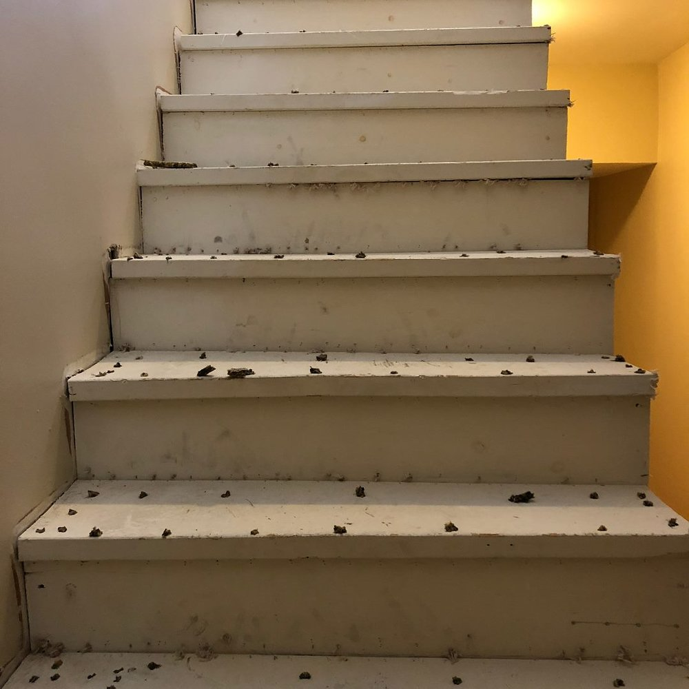 stairwell remodel philadelphia