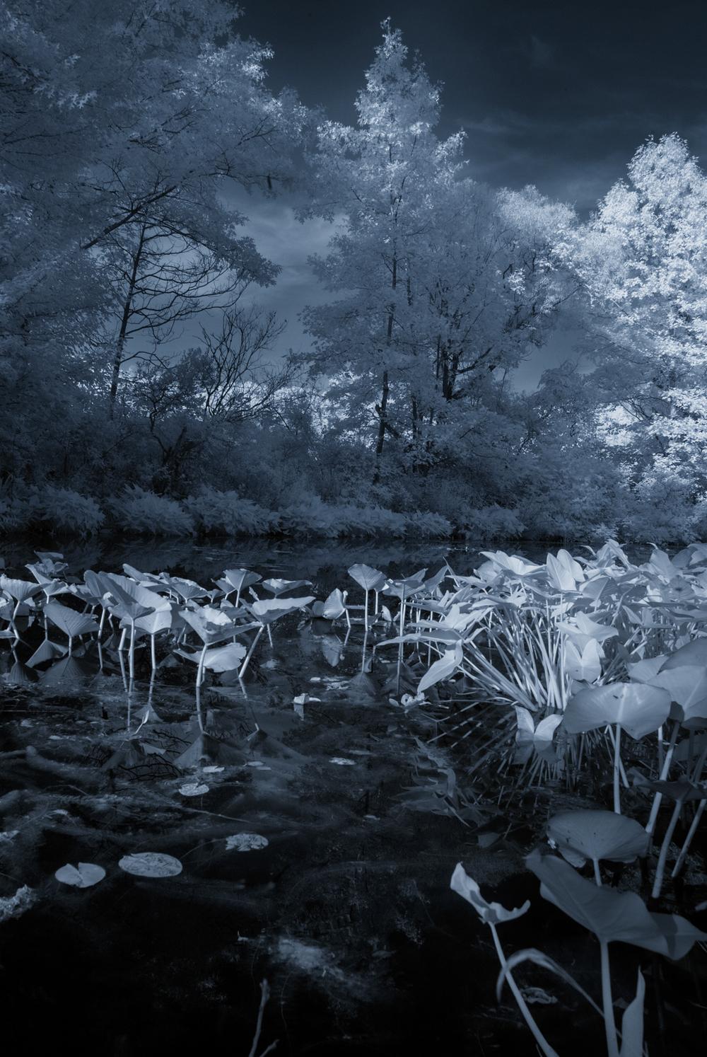 Infrared Swamp