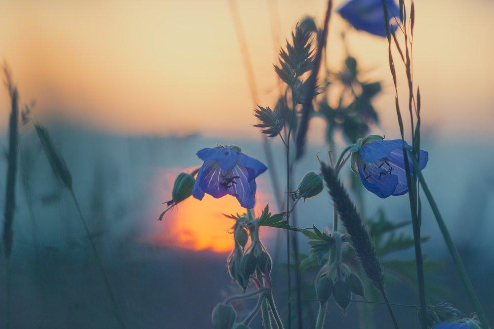 meadow-811339_1280-2.jpg