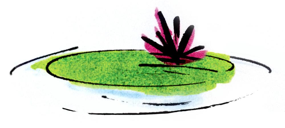 Lilypad-1.jpg
