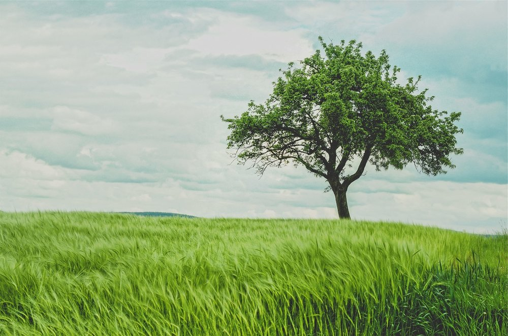 green-692079_1920.jpg