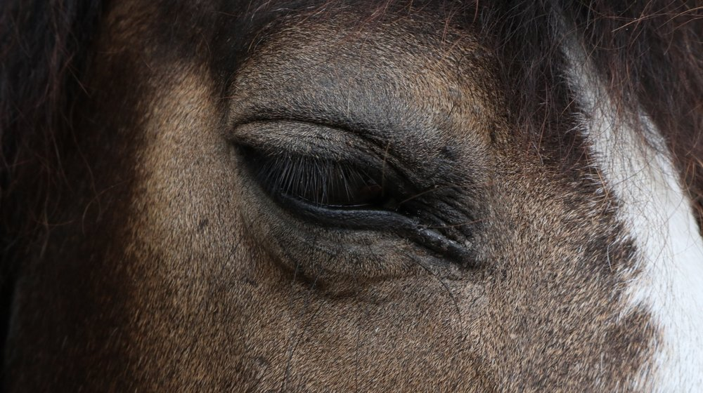 face of a horse in the present moment