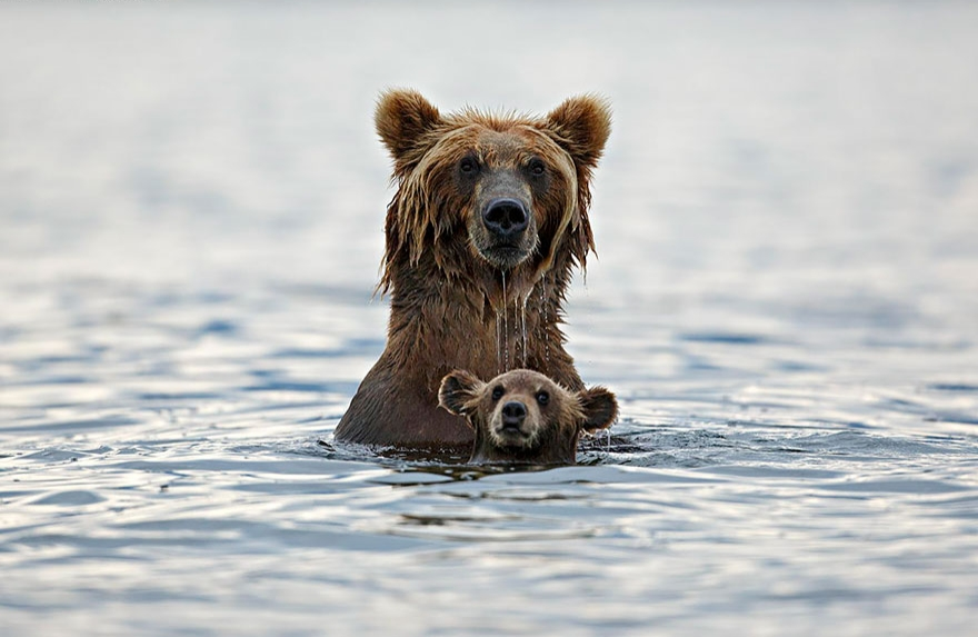 the seeker membership, momma bear