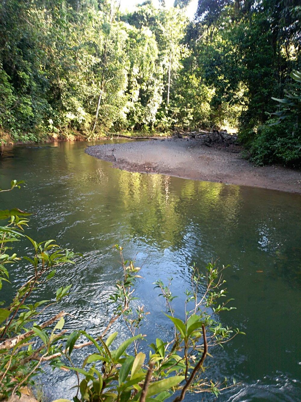 Corcovado National Park stream