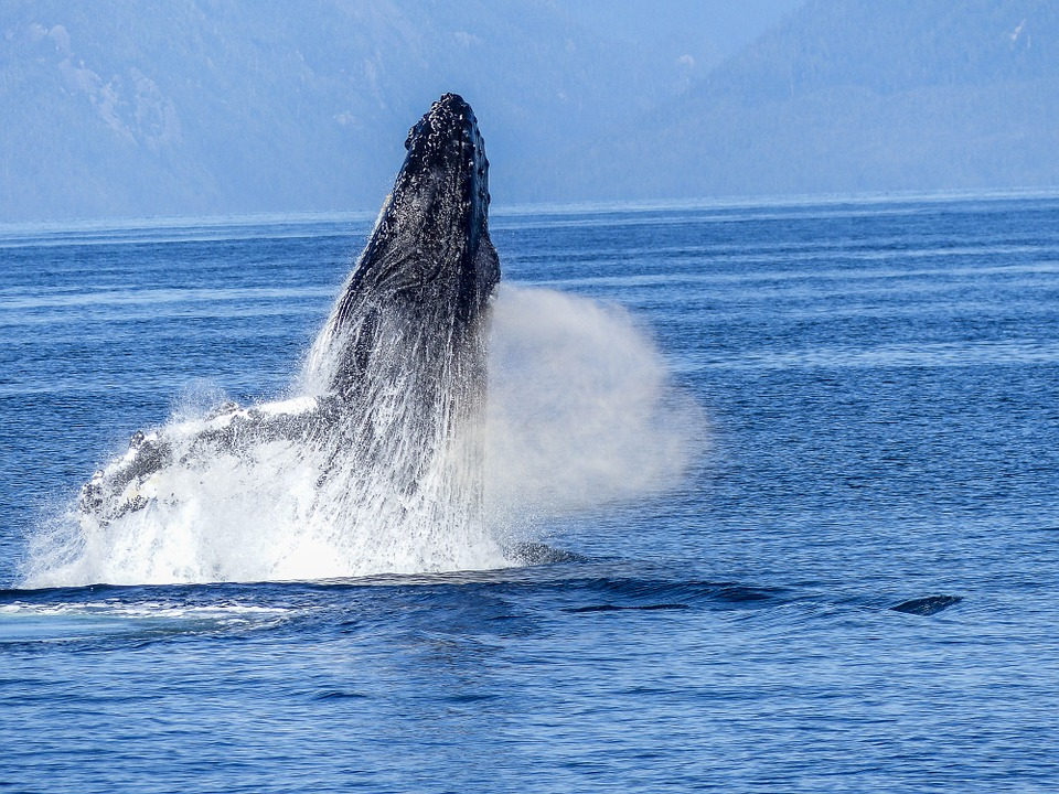 Learn more about our whale watching tour. -