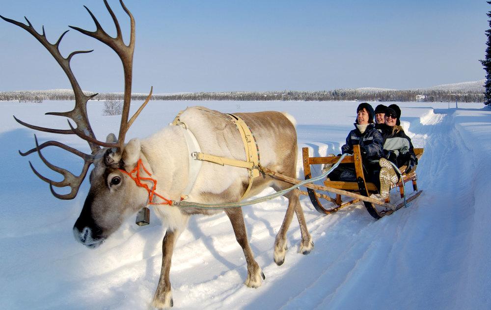 Reindeer-header-.jpg