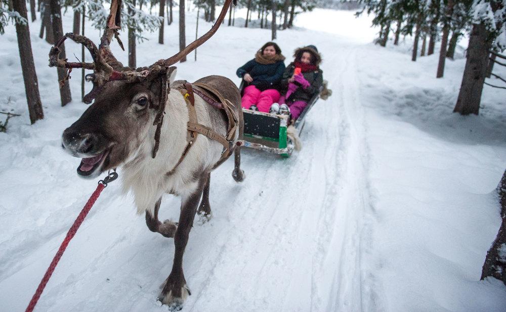 Reindeer-header.jpg